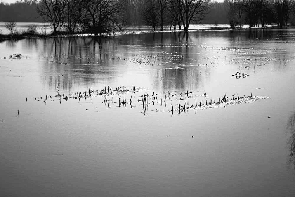 Winterhochwasser in den Illwiesen