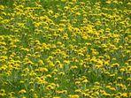 Winterhoffnung: Bald sehen die Wiesen wieder so aus
