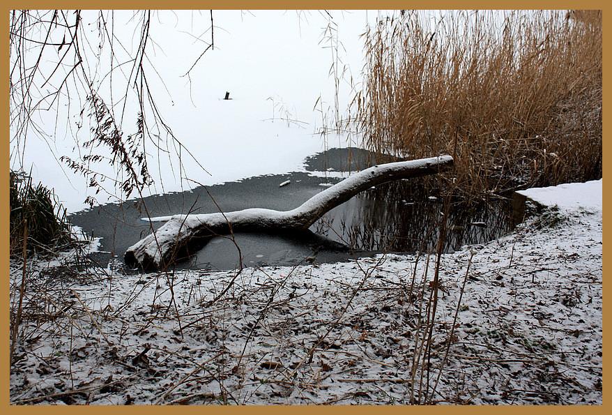 Winteridylle am Kupferteich