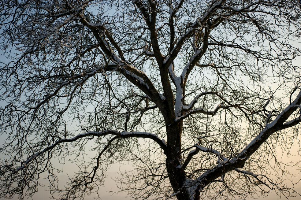 Winterimpression (4)