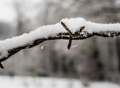 Winterimpression-5