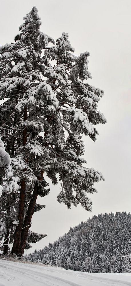 Winterimpression auf dem Plesch!