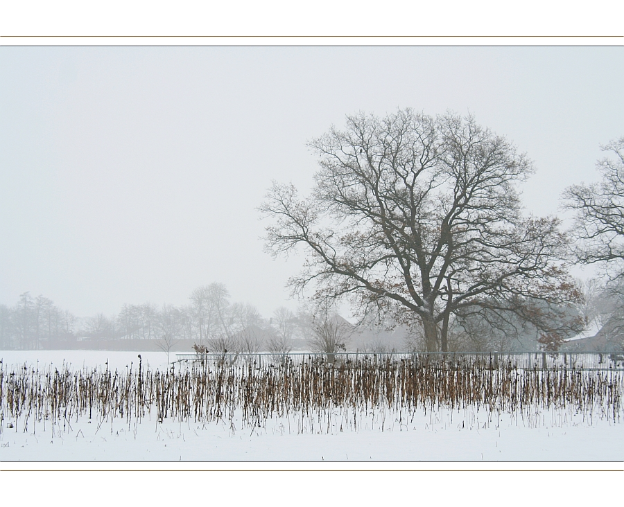 Winterimpression aus Bösel #1