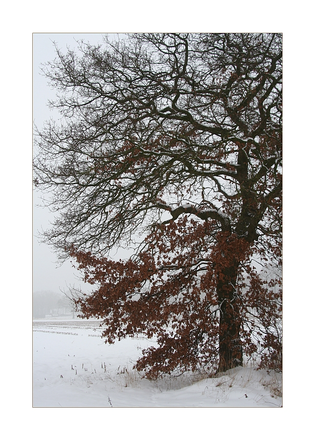 Winterimpression aus Bösel #2