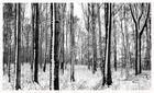 Winterimpression III