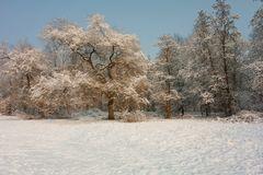 Winterimpression Nr. 3