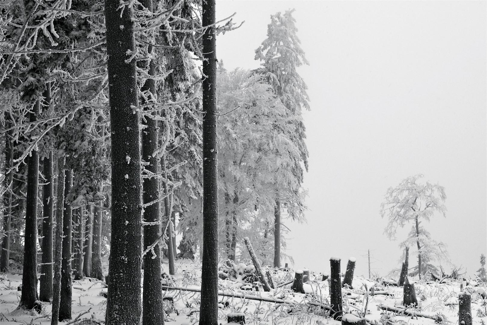 Winterimpression_05