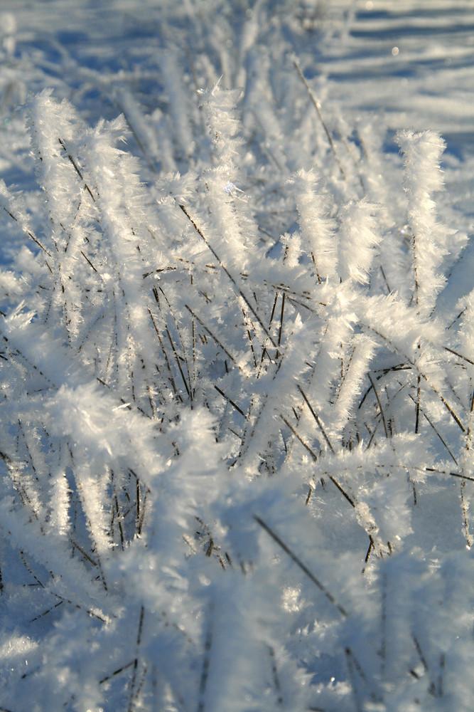Winterimpressionen 1