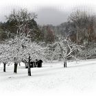 Winterimpressionen 2.....
