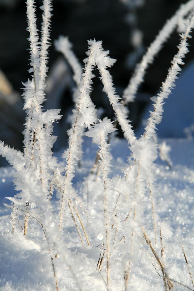 Winterimpressionen 4