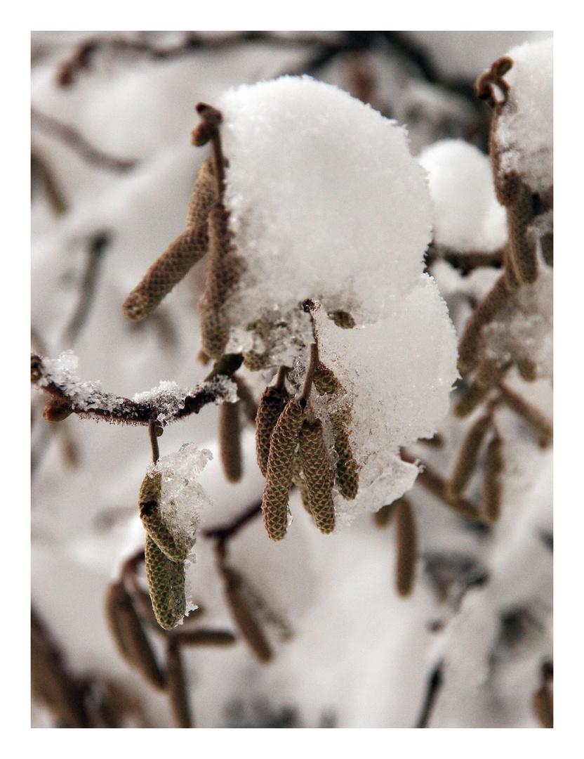 Winterimpressionen II
