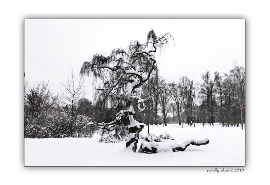 Winterimpressionen - Schlosspark Sanssouci