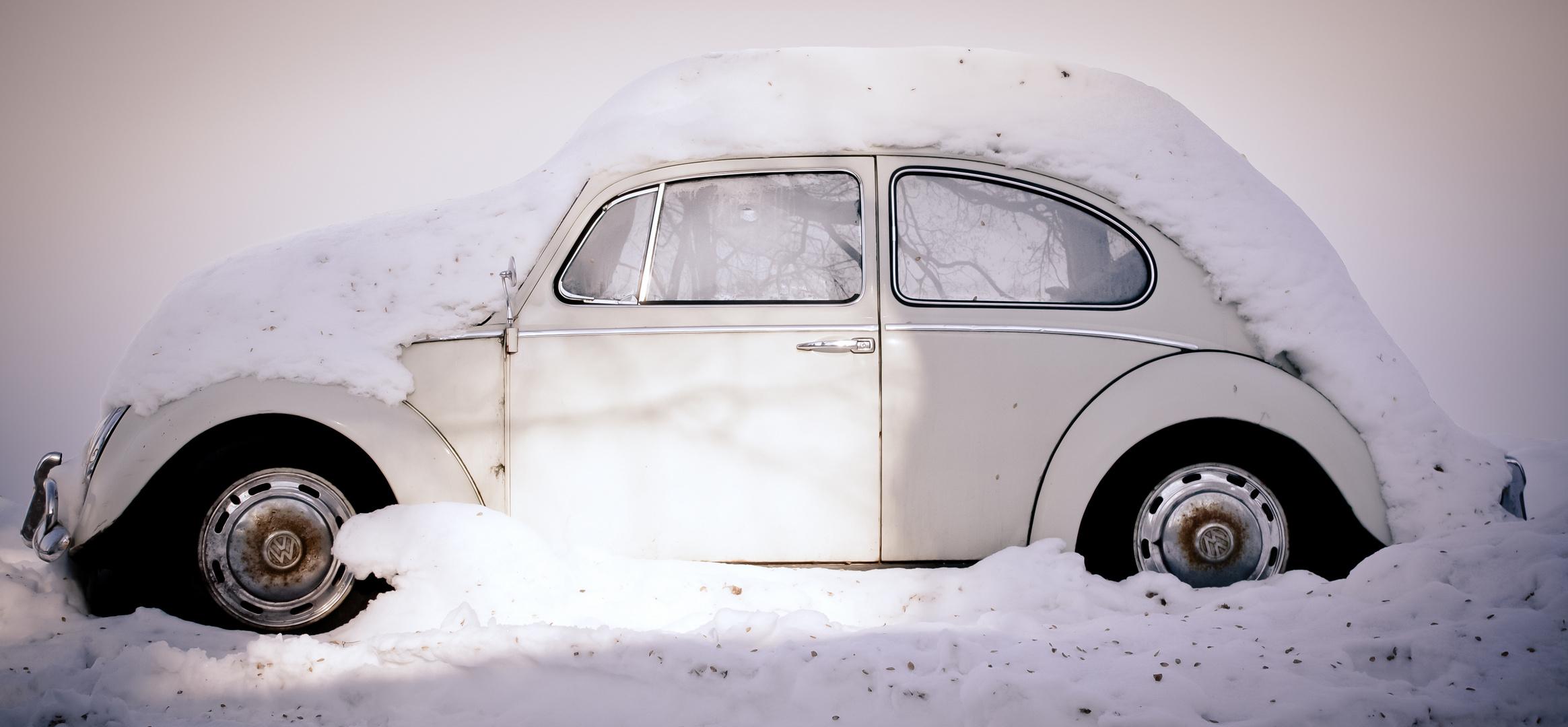 Winterkäfer