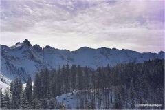 """""""winterland"""""""
