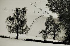 winterland mit zaun