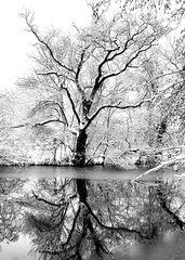 Winterland(2)