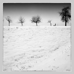"Winterlandschaf   ""Projekt Analoge Fotografie"""