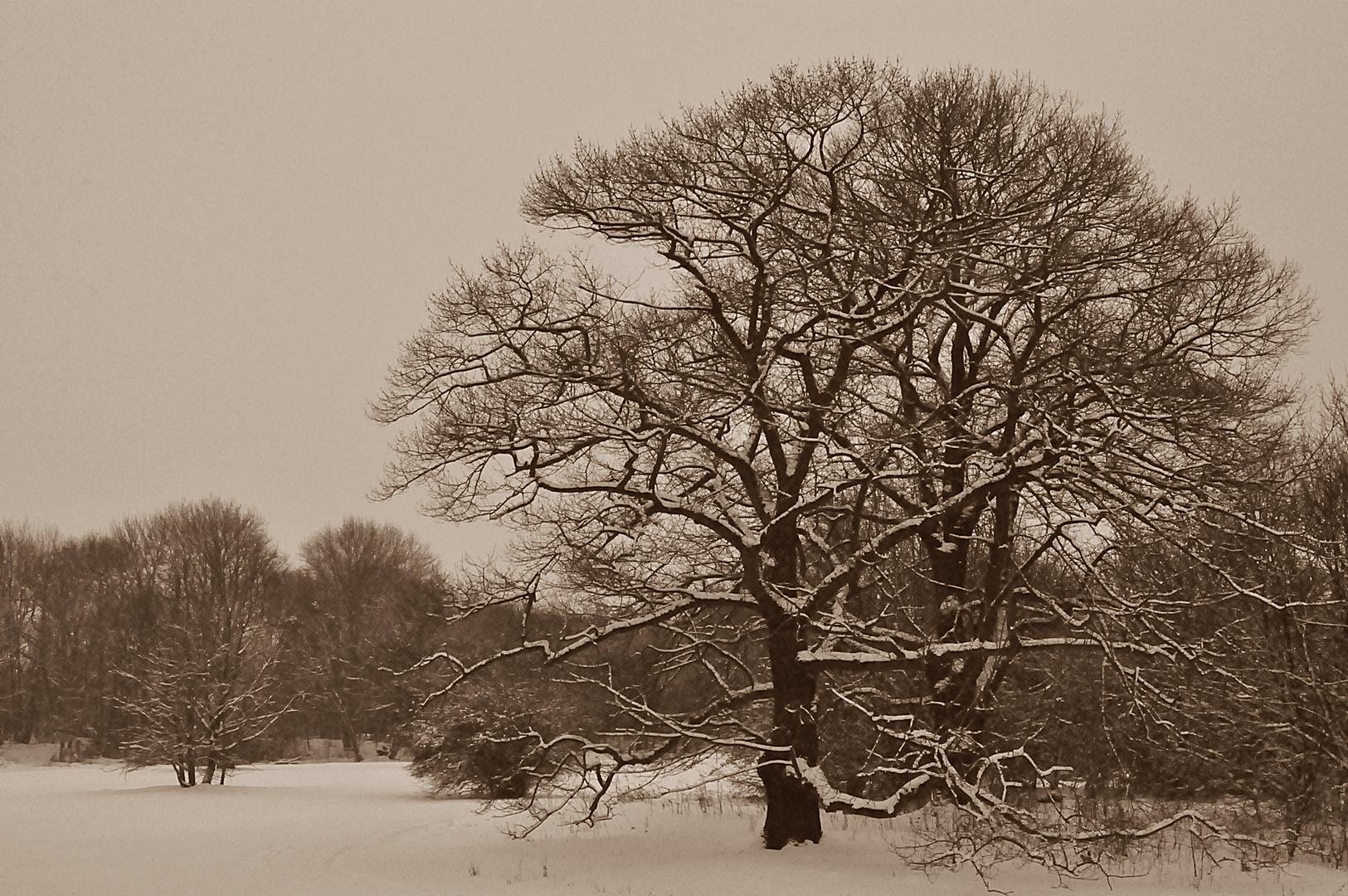 Winterlandschaft *