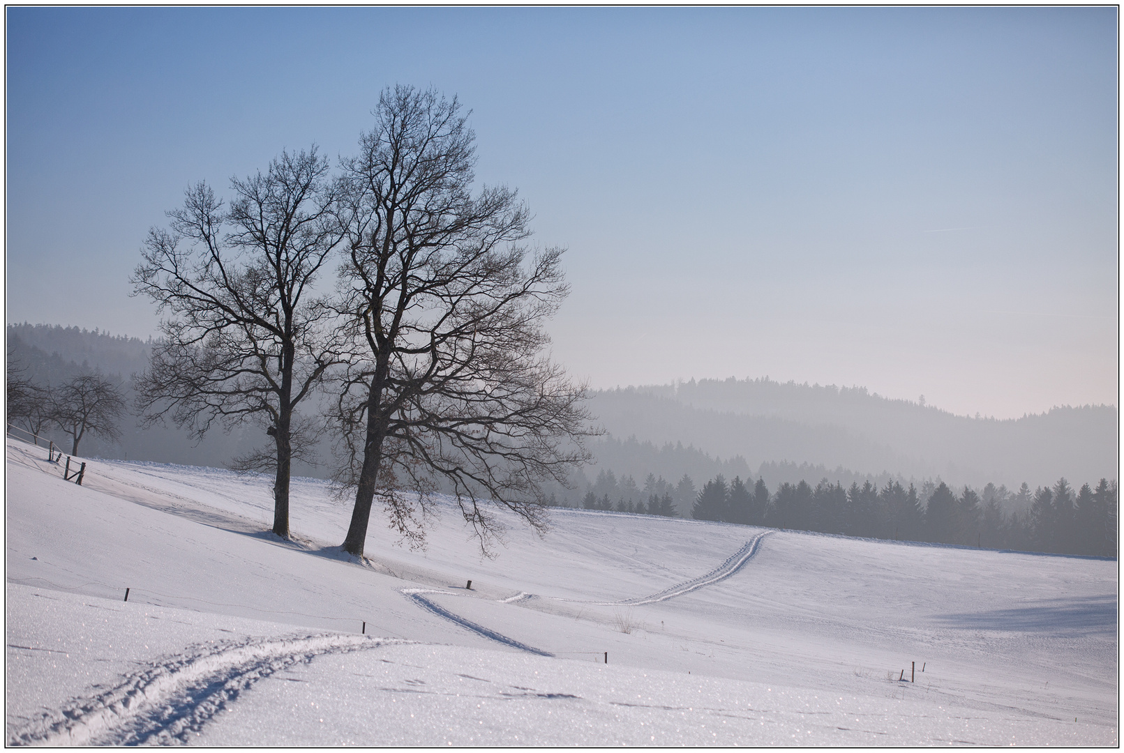 winterlandschaft foto  bild  bäume winter schnee