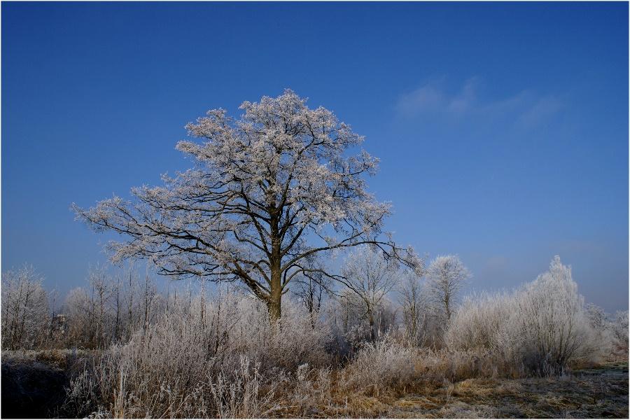 Winterlandschaft...
