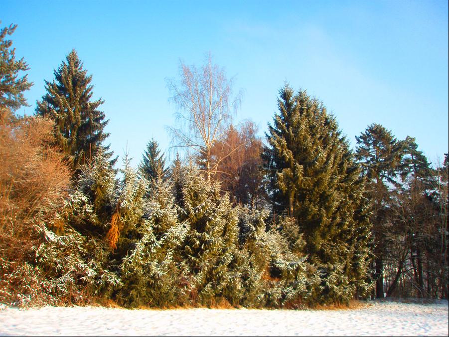 ...Winterlandschaft...