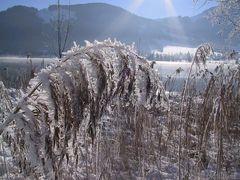 Winterlandschaft am Walchsee in Tirol