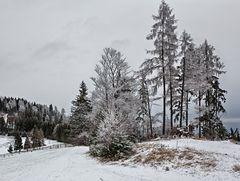 Winterlandschaft auf dem Plesch! (1)