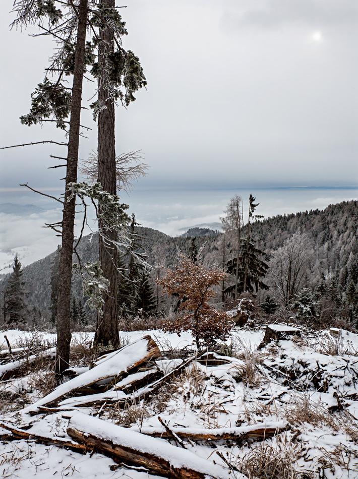 Winterlandschaft auf dem Plesch! (2)