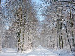 Winterlandschaft im Königsdorfer Wald bei Köln bzw. Frechen 2