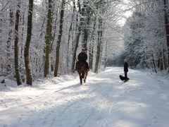 Winterlandschaft im Königsdorfer Wald bei Köln bzw. Frechen 4