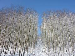 Winterlandschaft im Königsdorfer Wald bei Köln bzw. Frechen
