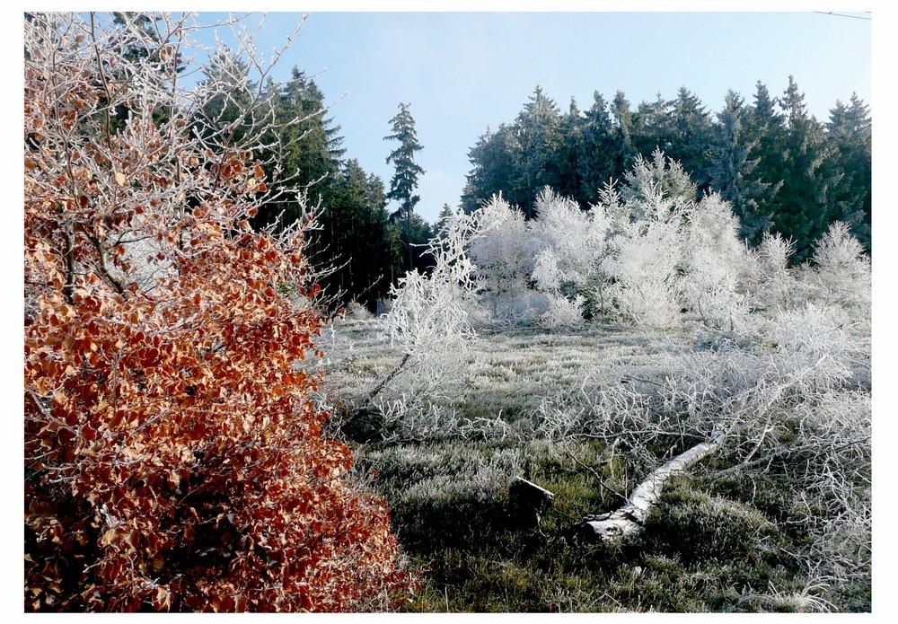 Winterlandschaft im Soonwald