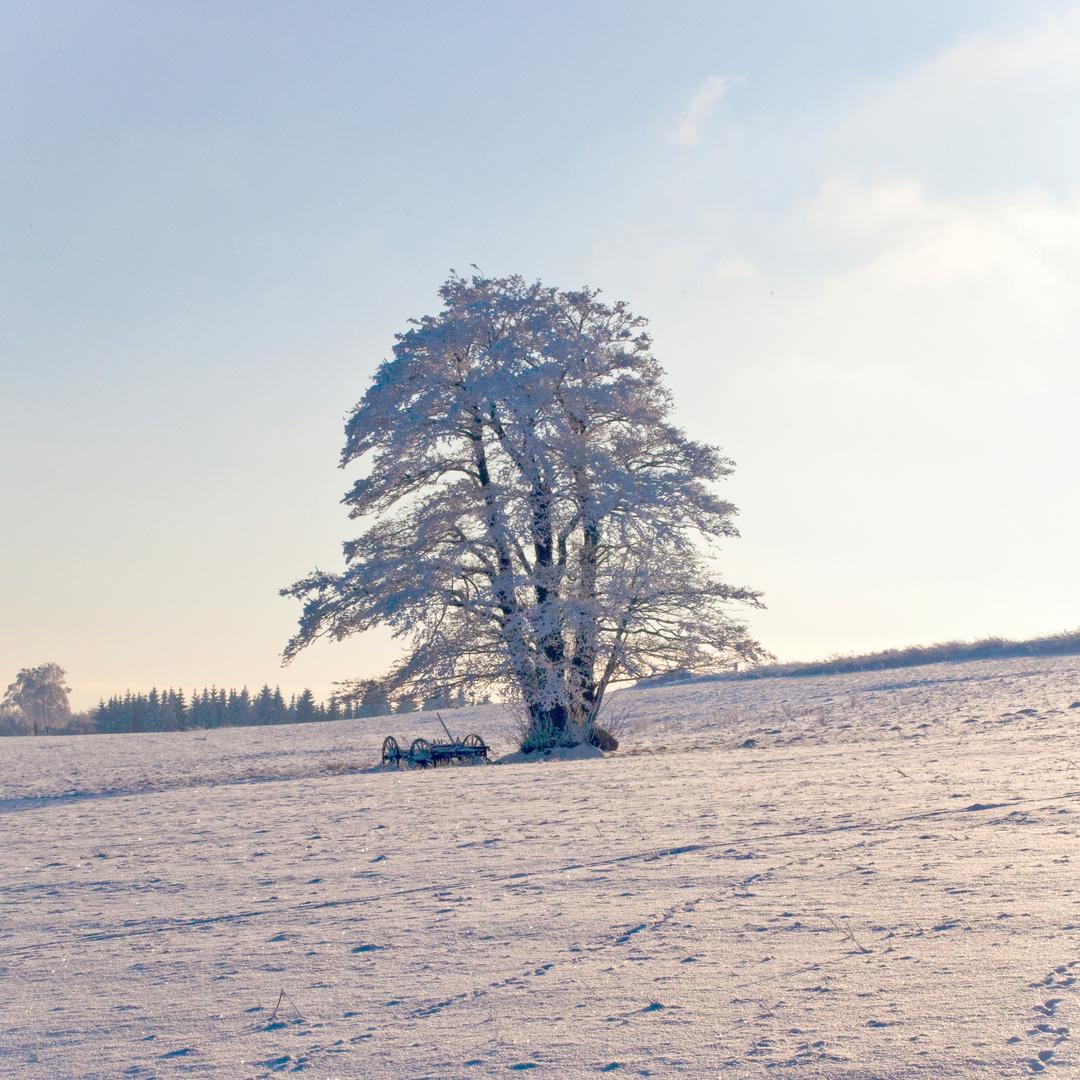Winterlandschaft in der Röhn