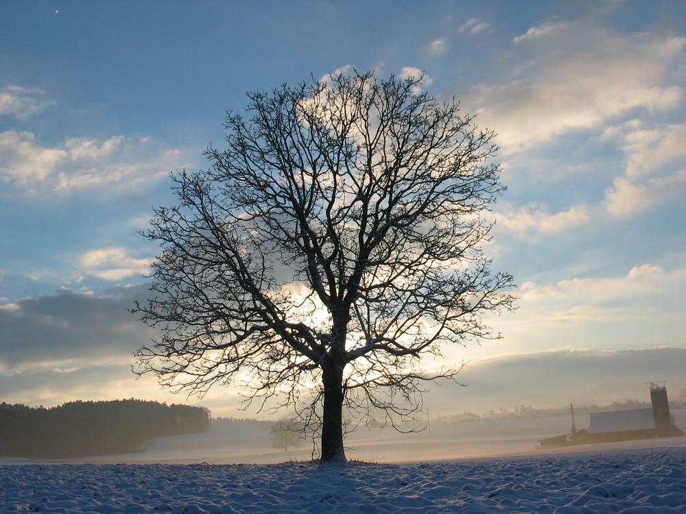 Winterlandschaft mit Baum