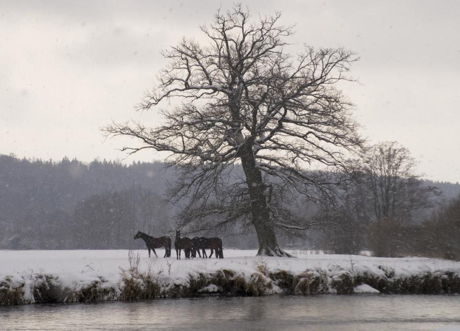 Winterlandschaft mit Pferden