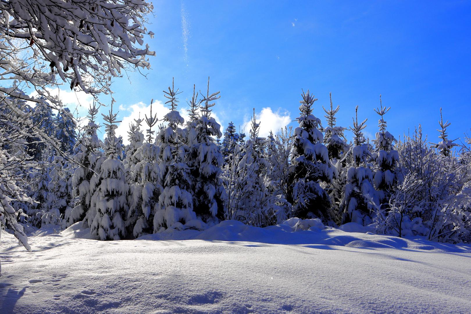 Winterlandschaft Switzerland