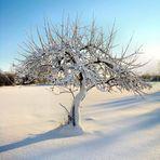 Winterlandschaft4