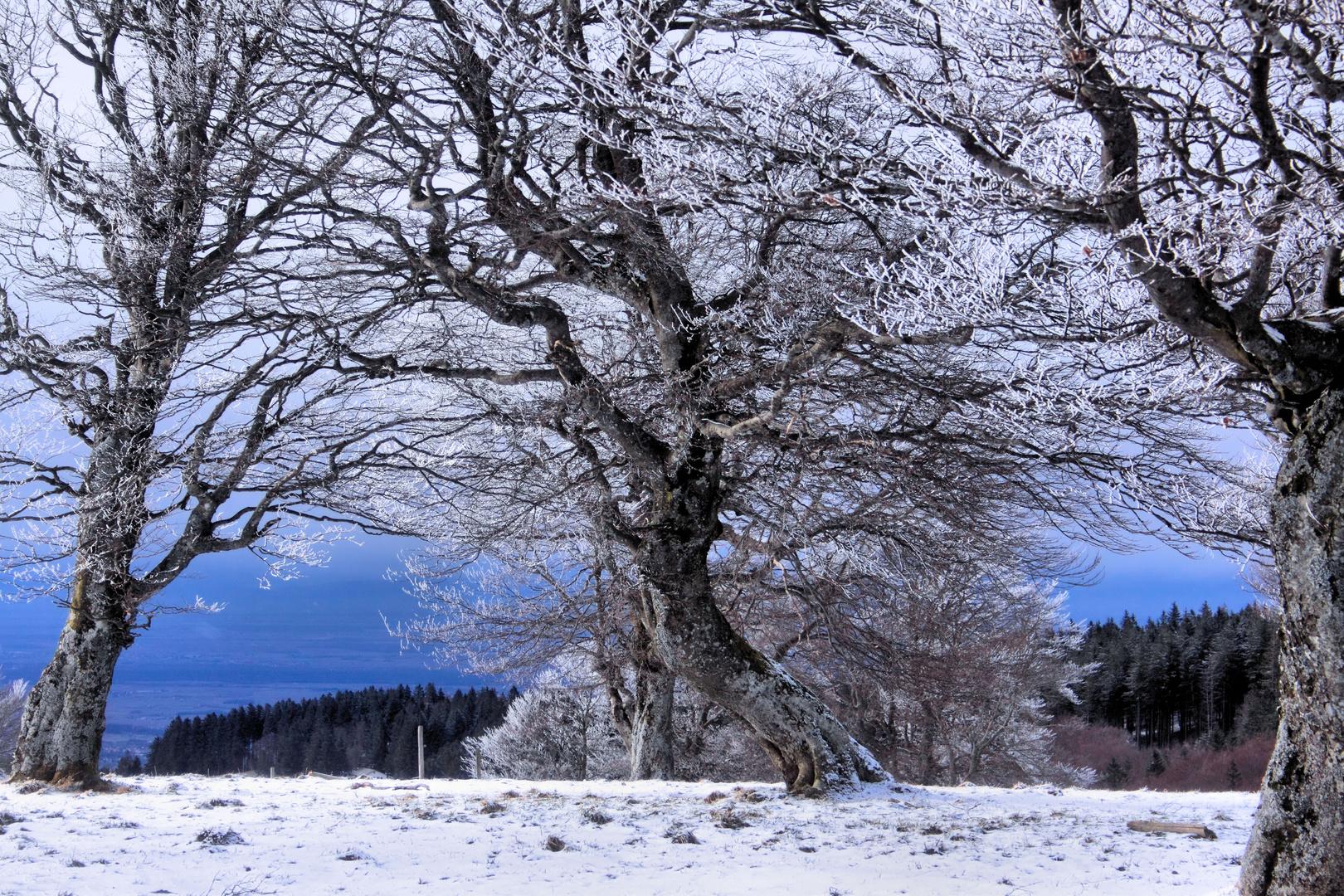 Winterliche Abendstimmung auf dem Stohren (Schwarzwald)