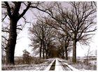 winterliche Allee in Brandenburg