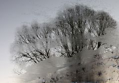 Winterliche Baumspiegelung