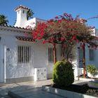 Winterliche Blütenpracht im Vorgarten eines Ferienhauses auf Gran Canaria ...