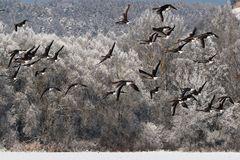 Winterliche Fotojagt