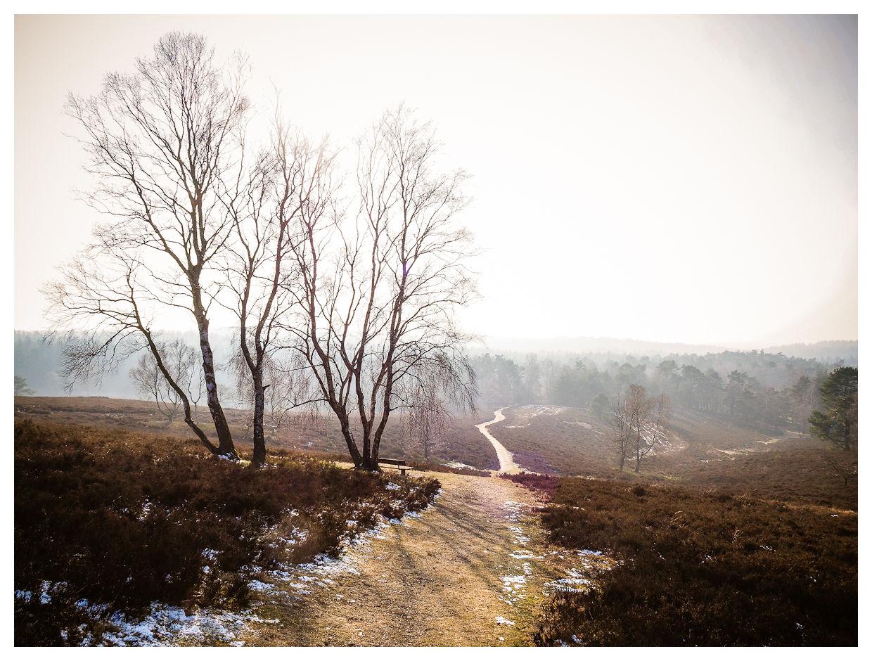 Winterliche Heide