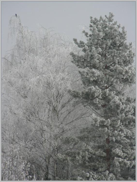 Winterliche Hochzeit In Nachbars Garten Foto Bild Jahreszeiten