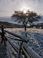 Winterliche Morgenstimmung! (1)