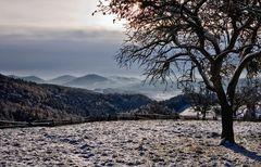 Winterliche Morgenstimmung! (2)