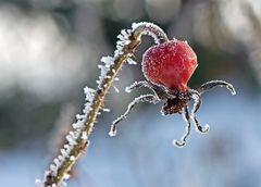 Winterliche Schönheit