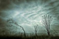 Winterliche Silhouetten