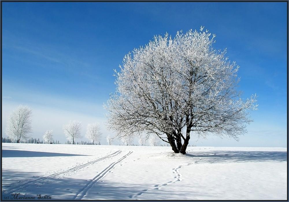 Winterliche Weide...