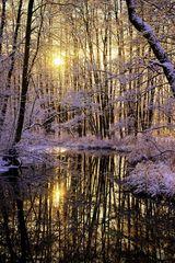 Winterlicher Erlenbruch #1